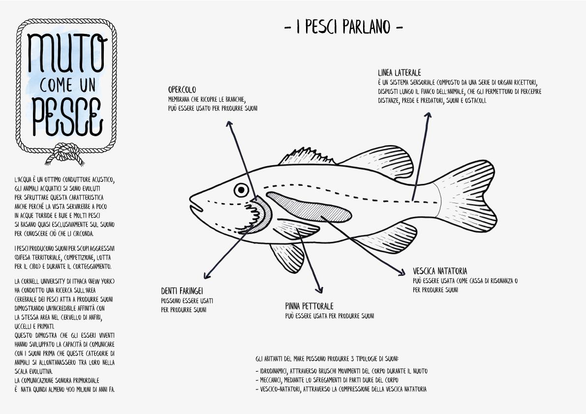 Muto come un pesce – interactive project